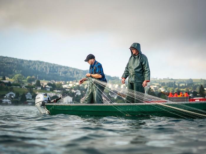Bodensee-Fischwochen | Pressebild Fischer am Untersee