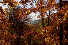 Bodanrück Herbst