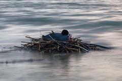 Nest bei Hegne